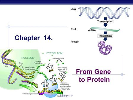 Chapter 14. From Gene to Protein Biology 114.