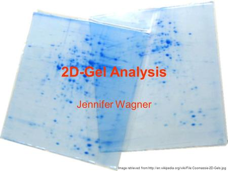 2D-Gel Analysis Jennifer Wagner Image retrieved from