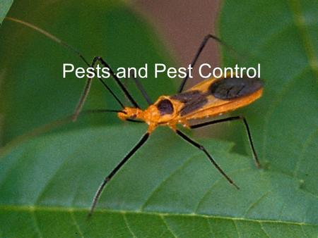 Pests and Pest Control. Pests Any troublesome, destructive, or annoying organism Insects eat about 13% of all crops in North America Only 1/8 th of insects.
