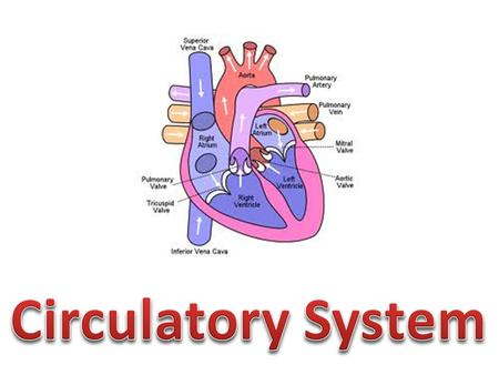 Circulatory or Cardiovascular System : delivers oxygen, nutrients, and hormones to the various body tissues and transports waste products to the appropriate.