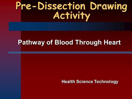Pre-Dissection Drawing Activity Pathway of Blood Through Heart Health Science Technology.