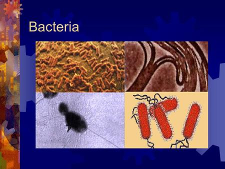 Bacteria. Classification of Bacteria  Archaebacteria  The extremists  Oxygen – free environments Produce methane  Concentrated salt water environments.