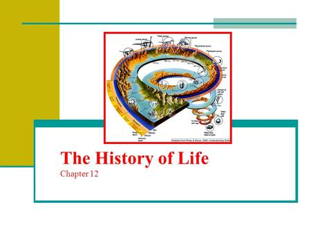 The History of Life Chapter 12. Fossils and Ancient Life A fossil is the preserved remains or evidence of an ancient organism Scientists who study fossils.