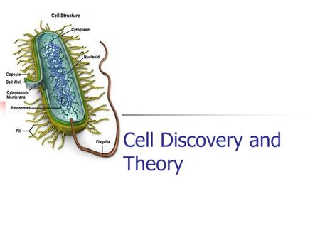 Cell Discovery and Theory. The Cell Theory All living organisms are made up of one or more cells. Cells are the basic unit of structure and function in.