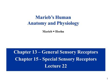 <strong>1</strong> <strong>Chapter</strong> 13 – General Sensory Receptors <strong>Chapter</strong> 15 - Special Sensory Receptors Lecture 22 Marieb's Human <strong>Anatomy</strong> <strong>and</strong> <strong>Physiology</strong> Marieb  Hoehn.