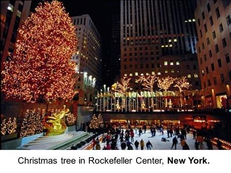 christmas tree in rockefeller center new york the capitol christmas tree in washington - Big Christmas Tree In New York