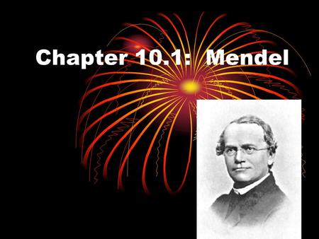 Chapter 10.1: Mendel. Gregor Mendel Father of genetics Studied heredity Passing on of traits from parent to offspring.
