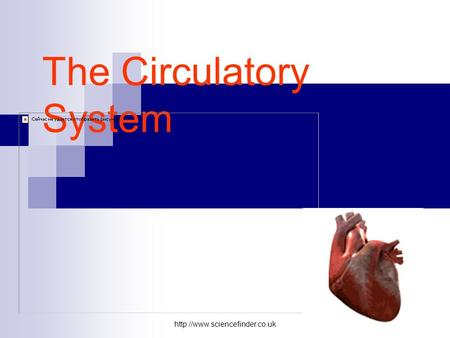 The Circulatory System.