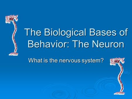 The Biological Bases of Behavior: The Neuron What is the nervous system?