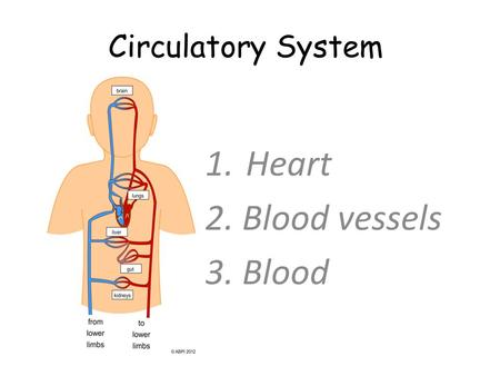Circulatory System 1.Heart 2. Blood vessels 3. Blood.