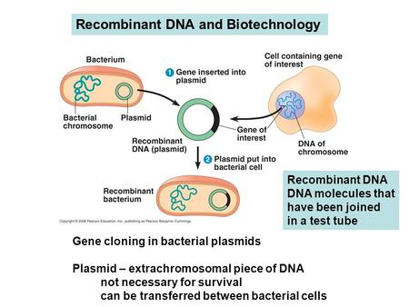 Recombinant DNA and Biotechnology Gene cloning in bacterial plasmids Plasmid – extrachromosomal piece of DNA not necessary for survival can be transferred.