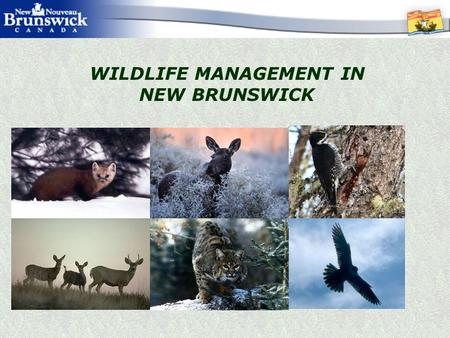 WILDLIFE MANAGEMENT IN NEW BRUNSWICK. WHY MANAGE WILDLIFE? Provincial MANDATE to manage populations of all wild species, their habitats and use, for the.