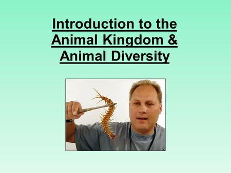 Introduction to the Animal Kingdom & Animal Diversity.