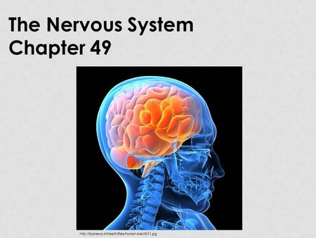 The Nervous System Chapter 49