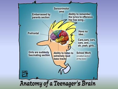Objectives To challenge some of the myths we hold about the teenage brain To learn about how the teenage brain processes information To understand why.
