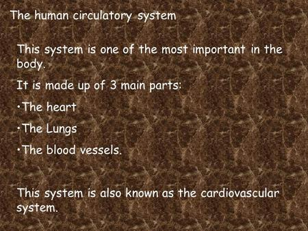 The human circulatory system This system is one of the most important in the body. It is made up of 3 main parts: The heart The Lungs The blood vessels.