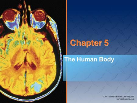 Chapter 5 The Human Body. Introduction A working knowledge of <strong>anatomy</strong> is important. Knowledge of <strong>anatomy</strong> helps to communicate correct information: –To.