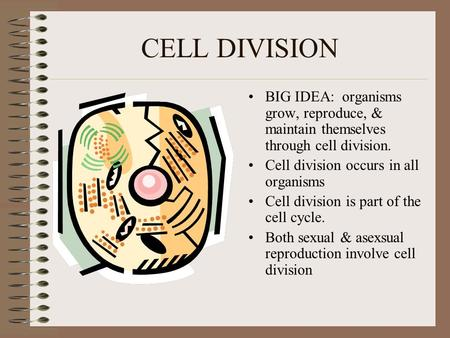 CELL DIVISION BIG IDEA: organisms grow, reproduce, & maintain themselves through cell division. Cell division occurs in all organisms Cell division is.