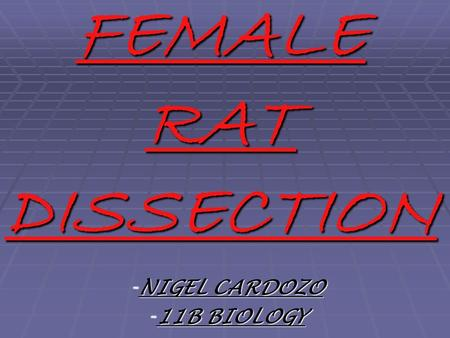 FEMALE RAT DISSECTION - NIGEL CARDOZO - 11B BIOLOGY.