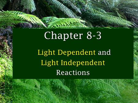 Chapter 8-3 Light Dependent and Light Independent Reactions.