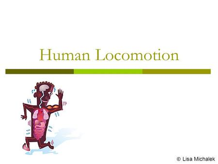 Human Locomotion © Lisa Michalek. Locomotion  The interaction of muscles with the skeleton that results in body movement is known as locomotion.  Locomotion.