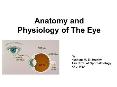 Retina anatomy and physiology ppt on cells