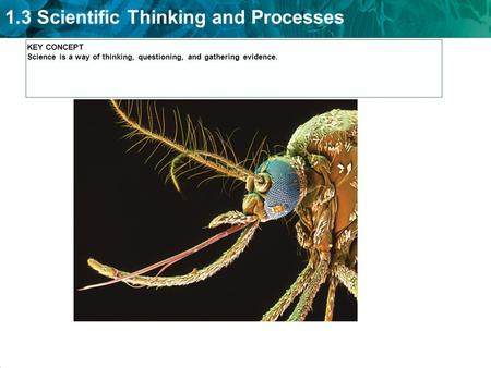KEY CONCEPT Science is a way of thinking, questioning, and gathering evidence.