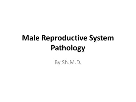 Male Reproductive System Pathology By Sh.M.D.. The markedly enlarged prostate seen here has not only large lateral lobes, but a very large median lobe.