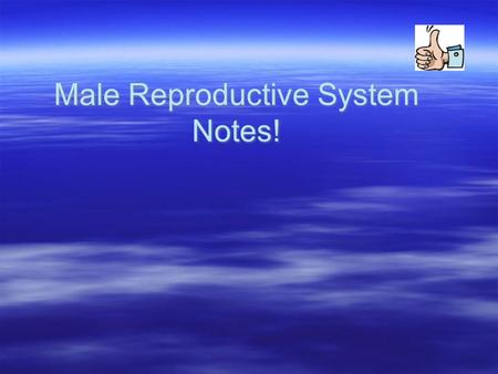 Male Reproductive System Notes!. Vocabulary To Know!  Urethra  Penis  Testicle or Testis  Scrotum  Vas deferens  Erection  Urethra  Penis  Testicle.