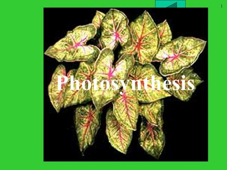 1 Chapter 10 part II <strong>Photosynthesis</strong>. 2 Outline What is <strong>Photosynthesis</strong>? Properties of light What are waves? Useable light colors Chloroplast structures.