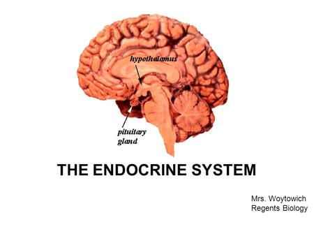 THE ENDOCRINE SYSTEM Mrs. Woytowich Regents Biology.