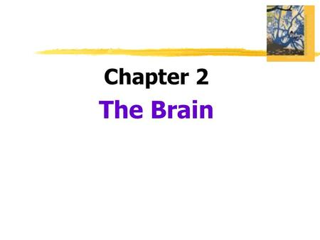 Chapter 2 The Brain.  Lesion  tissue destruction  a brain lesion is a naturally or experimentally caused destruction of brain tissue.