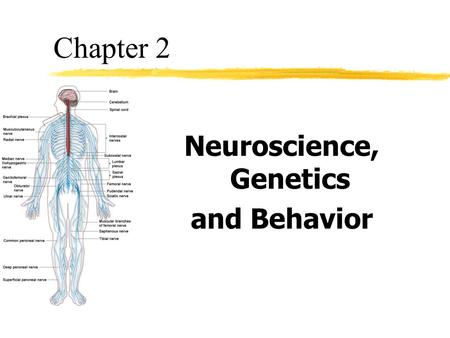 Neuroscience, Genetics and Behavior Chapter 2. Objective 1 zDescribe the structure of the neuron and explain how neural impulses are generated.
