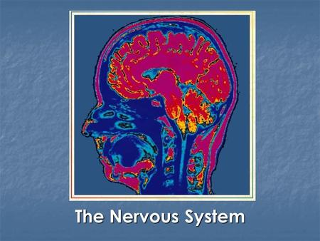 The Nervous System. I. Introduction The basic functional unit of the nervous system is the neuron Neuron  Specialized cell that transmits information.