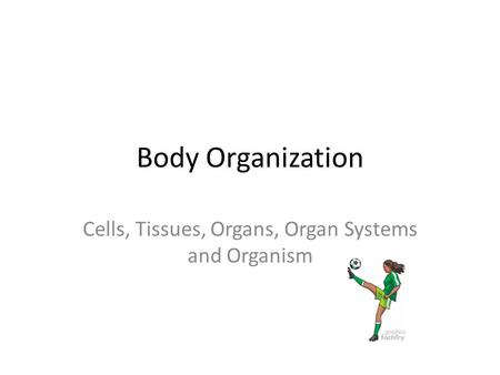 Cells, Tissues, Organs, Organ Systems and Organism