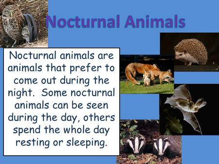 Nocturnal animals are animals that prefer to come out during the night. Some nocturnal animals can be seen during the day, others spend the whole day resting.