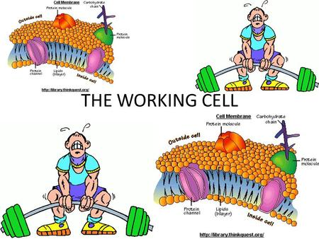 THE WORKING CELL.