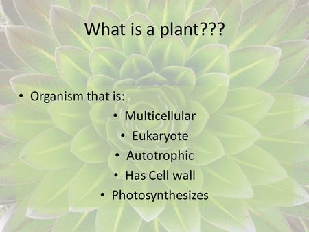 What is a plant??? Organism that is: Multicellular Eukaryote