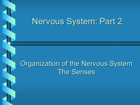 Nervous System: Part 2 Organization of the Nervous System The Senses.