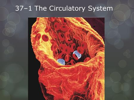 37–1 The Circulatory System. The circulatory system and respiratory system work together to supply cells with the nutrients and oxygen they need to stay.