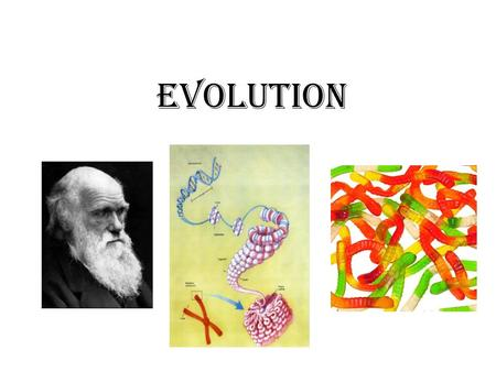"Evolution. What is evolution? A basic definition of evolution… ""…evolution can be precisely defined as any change in the frequency of alleles within a."