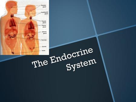 The Endocrine System. o Def: System of glands in various parts of the body that manufacture & secrete hormones into the bloodstream o hormones = chemical.