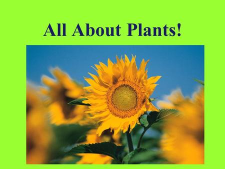All About Plants!.