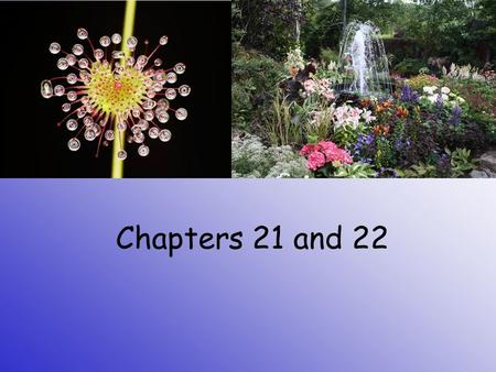 Chapters 21 and 22.