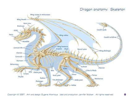 Large Animal Skeletal Systems Functions Of The Skeletal System Form