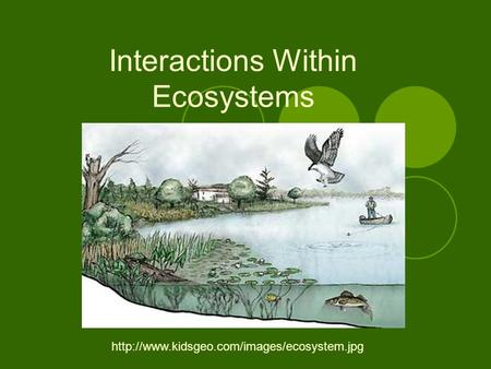 Interactions Within Ecosystems