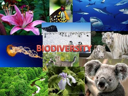 INTRODUCTION The term Biodiversity was first coined by Walter G. Rosen in 1986. The biosphere comprises <strong>of</strong> a complex collections <strong>of</strong> innumerable organisms,
