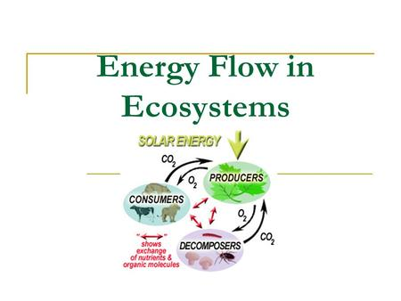 Energy Flow in Ecosystems. Food chains: show the path of energy through trophic (feeding) levels Energy come from the Energy is not recycled – it decreases.