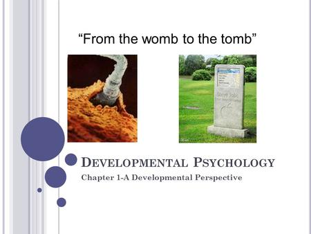 "D EVELOPMENTAL P SYCHOLOGY Chapter 1-A Developmental Perspective ""From the womb to the tomb"""