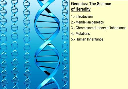 Genetics: The Science of Heredity 1.- Introduction 2.- Mendelian genetics 3.- <strong>Chromosomal</strong> theory of inheritance 4.- Mutations 5.- Human Inheritance.